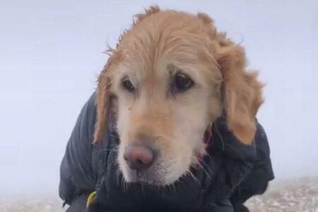 雪山で2週間も行方不明だった犬を登山者が救助、歩けず、吠える力も残っていなかった