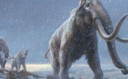 100万年以上も前に生息していたマンモスからDNAの抽出に成功