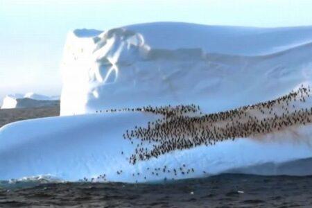 漂う氷山の上で休憩するペンギンたち、数百羽が群れる様子を撮影
