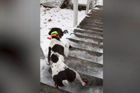 冷たい所を歩きたくないワンコ、足を2本しか使わず階段を下りてしまう