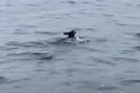 岸から離れた場所を泳いでいたカンガルー、溺れそうな所を男性が船で救助