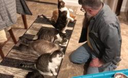 きちんとお座りして順番に餌を食べる、珍しいネコたち