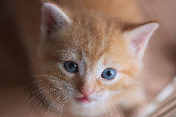 韓国でペットに新型コロナ検査、症状が出ている犬や猫が対象