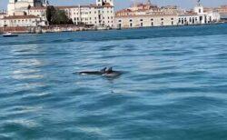 ベネチアに2頭のイルカが出現、運河を泳いでいく貴重な姿を撮影