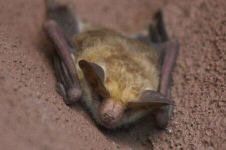 【新型コロナ】WHOの科学者、パンデミックは野生動物の取引が原因か