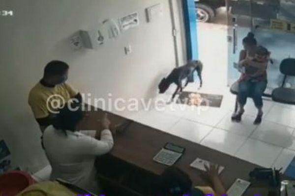 ケガをした野良犬、自ら動物病院へ姿を現し、治療を受ける