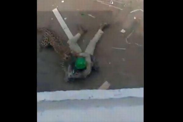 インドで住宅街にレオパルドが侵入、人を襲う場面がショッキング