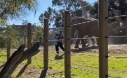 幼い娘を抱いた男がゾウのエリアに侵入、襲われそうになる動画がショッキング!