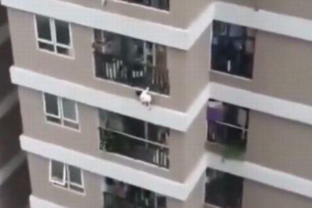 まさに奇跡…マンションの12階から少女が落下、男性が見事受け止め命を救う