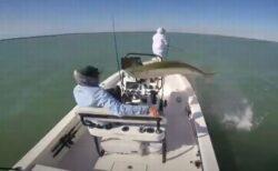 巨大な魚がジャンプして船を飛び越えていく、乗っていた男性もびっくり【動画】