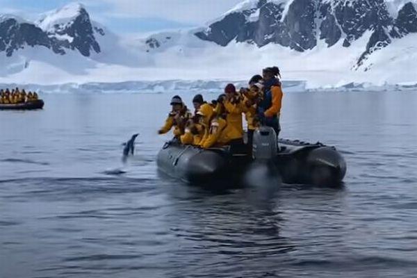 南極でシャチに追われていたペンギン、思わず人間のボートに乗ってしまう