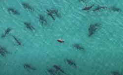 フロリダの沖合で無数のサメが集結、ドローンで撮影された動画が圧巻