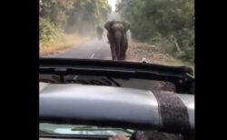 おとなしいはずの象が突進して来た!観光客が撮影した動画が恐ろしい