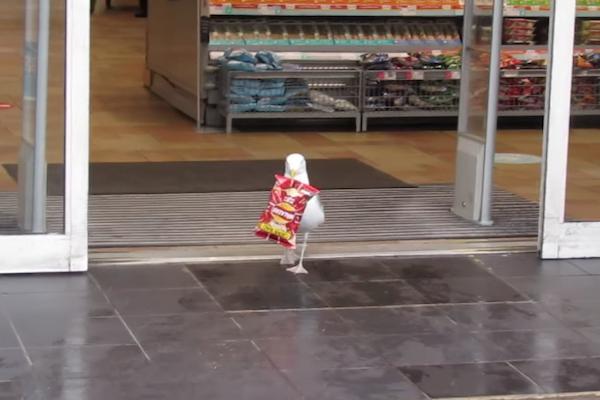 スーパーで堂々と万引きするカモメが可笑しい【動画】