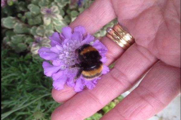 羽を失ったハチと、ある女性の間に生まれた友情