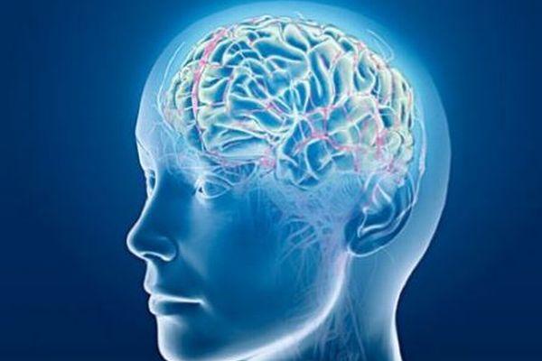 【ゾンビ遺伝子】死後も脳の一部の細胞が活発化していた:イリノイ大学