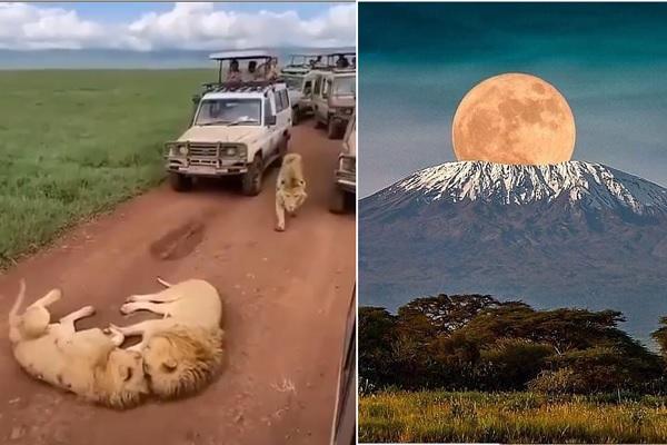 渋滞の先にはお昼寝中のライオン!?タンザニアへの旅気分が味わえるアカウント