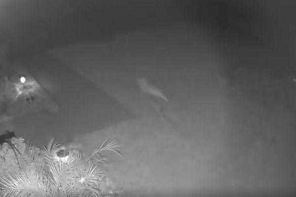 恐竜の赤ちゃん?防犯カメラが尻尾の長い奇妙な動物を捉える【アメリカ】