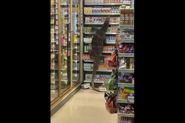 まさに破壊獣!巨大なトカゲがタイの店で、次々と商品を棚から落としていく