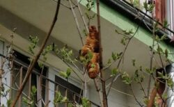 ポーランドの住民が奇妙な動物が木にいると通報…しかし意外なものだと判明