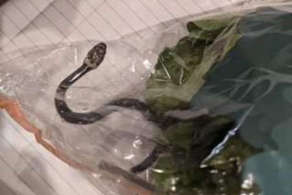 豪のスーパーで購入したレタスの中に毒ヘビ、パッケージに生きたまま入っていた!