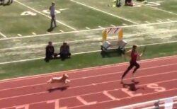 高校の運動会でワンコがトラックに登場、リレーに参加し、ランナーと競争