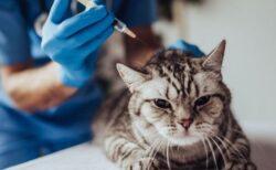 世界で初めて、ロシアで動物向けの新型コロナワクチン「Carnivac-Cov」を承認