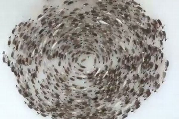 北極圏で撮影されたトナカイの群れ、壮大なサークルを描く姿が圧巻