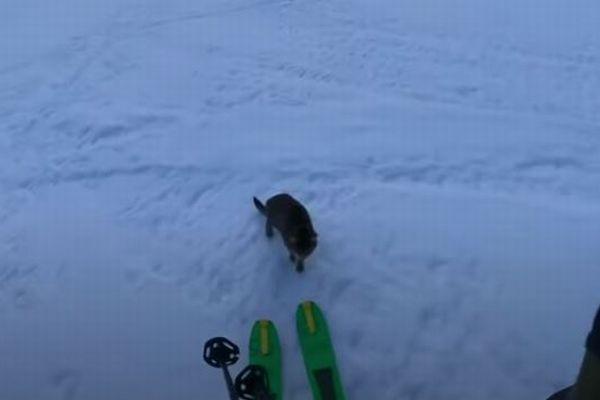 登山者がスイスの山で迷子のネコを発見、一緒に山頂までついてきた!