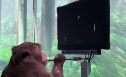 脳インプラントされたサルが思念でゲーム機を操作、イーロン・マスク氏のNeuralinkが動画を公開