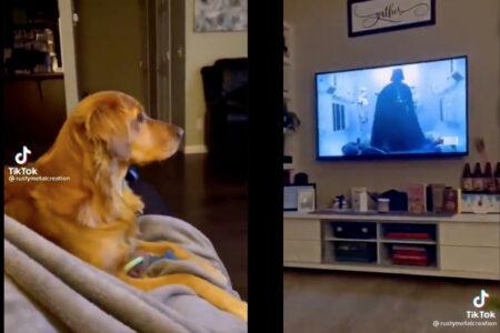 初めてダース・ベイダーを見たワンコの反応が可愛すぎる