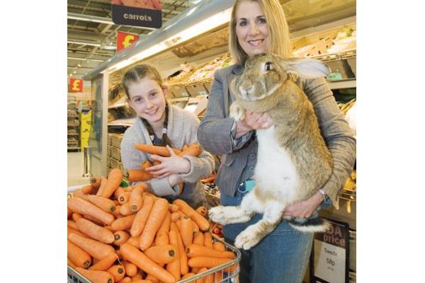 ギネス認定の世界「最長」のウサギが盗まれ、警察が捜査中