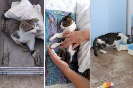 足が動かずヒトを威嚇していた猫が、元気な甘えん坊になる姿が感動的!