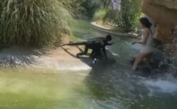 危険!米の動物園で女性がサルの敷地内に侵入、辛口チートスを与えてしまう
