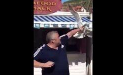 食べ物を奪われそうになった男性、カモメにパンチをくらわす