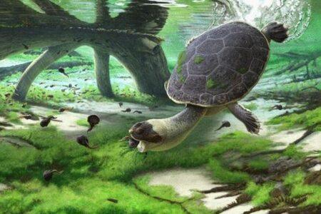 マダガスカルで発見されたカメの化石、カエルのような姿で白亜紀後期に生息