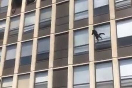 火災が発生した建物の5階からネコが大ジャンプ、怪我なく着地に成功