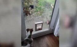 戦う気マンマンのはずが・・・隣の猫を追い払おうとしたワンコの反応が面白い