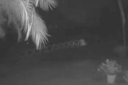 フロリダ州で2つの光る物体が並んで飛んでいく、不思議な動画を撮影
