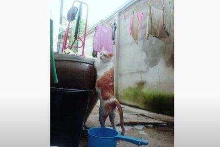 とってもお利口さんなネコ、身体を洗われている間も同じ姿勢を保ち続ける