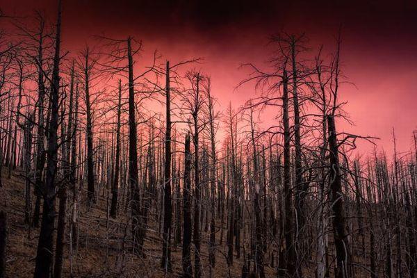 密かに地中で燃え続けるゾンビ・ファイヤー、再び引火し森林火災を発生させる