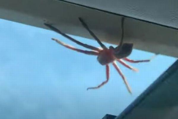 着陸直前の機内に巨大なクモが出現、パイロットの反応とは?
