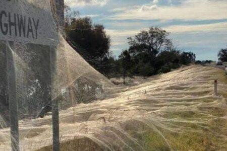 オーストラリアでクモの巣が大量発生、草や道路標識まで白い糸で覆われる