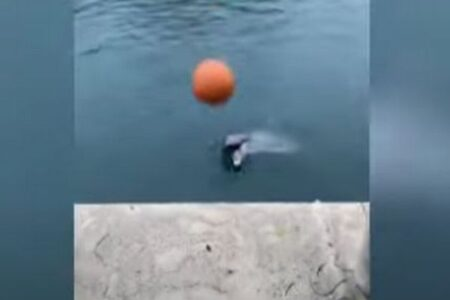 女性と一緒にキャッチボールをするイルカが、賢くてかわいい!