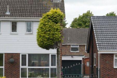 イギリスの庭にある樹木が、刈り込まれて半分だけになっちゃった!