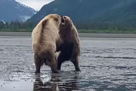 旅行者の目の前で巨大なクマが争う、アラスカで撮影された迫力映像