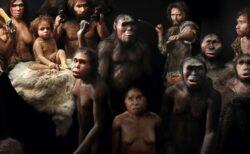 イスラエルで新しいタイプの人類化石を特定、ネアンデルタール人の祖先か