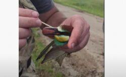 虫が喉に詰まった鳥、人間が丁寧に取り除き、再び空へ羽ばたいていく