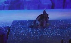 中国の舞台に本物のオオカミが登場、ステージを走り回る動画が拡散