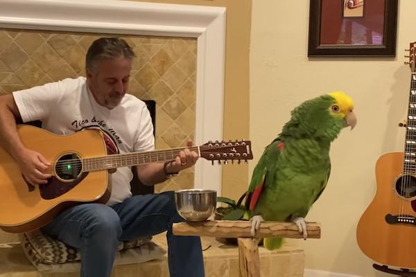 ロックの名曲を歌うオウムが、音楽的に上手すぎる